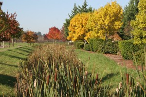 Bioswale in West Eugene by Living Concepts