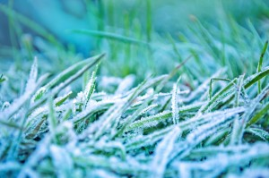 morning-frozen-grass