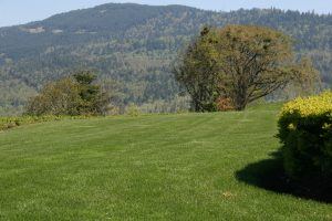 Lawn-Mowing-Services-in-Eugene